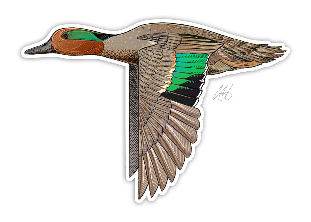 Green Winged Teal Decal