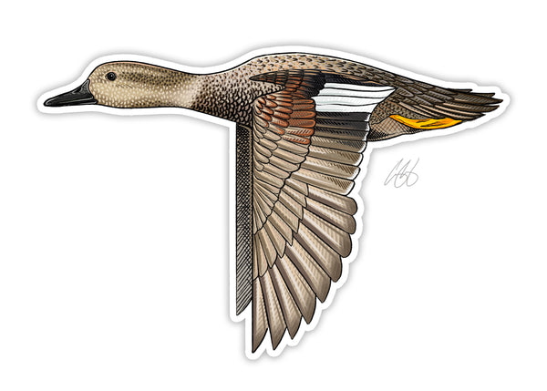 Gadwall Decal