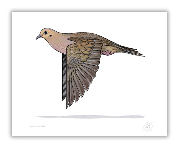 Mourning Dove Print