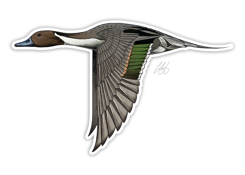 Northern Pintail Decal
