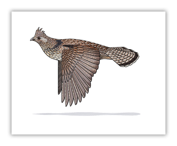 Ruffed Grouse Print