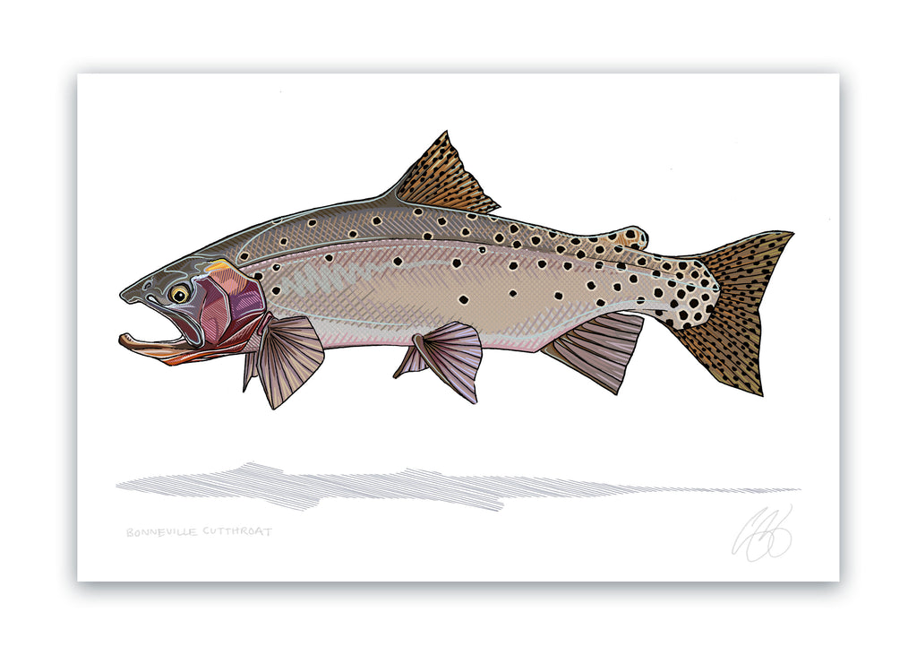 Bonneville Cutthroat Print