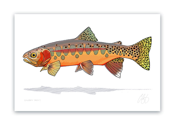 Golden Trout Print
