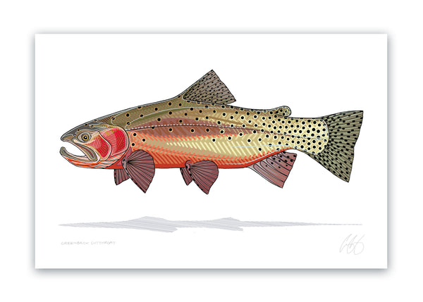 Greenback Cutthroat Print