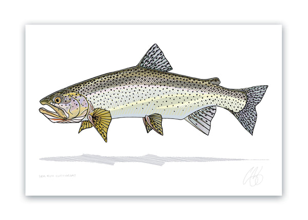 Sea Run Cutthroat Print
