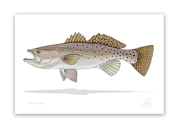 Speckled Trout Print