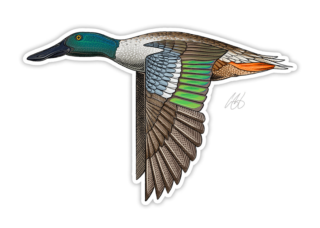 Northern Shoveler Decal