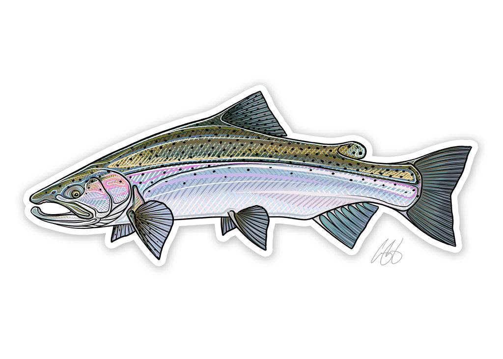 Steelhead Decal