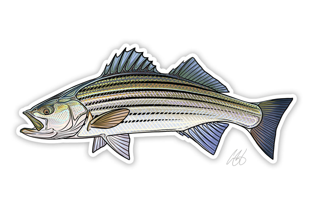 Striped Bass Decal