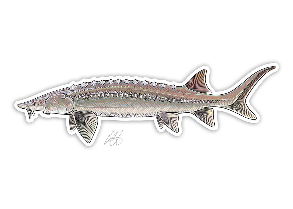 Sturgeon Decal