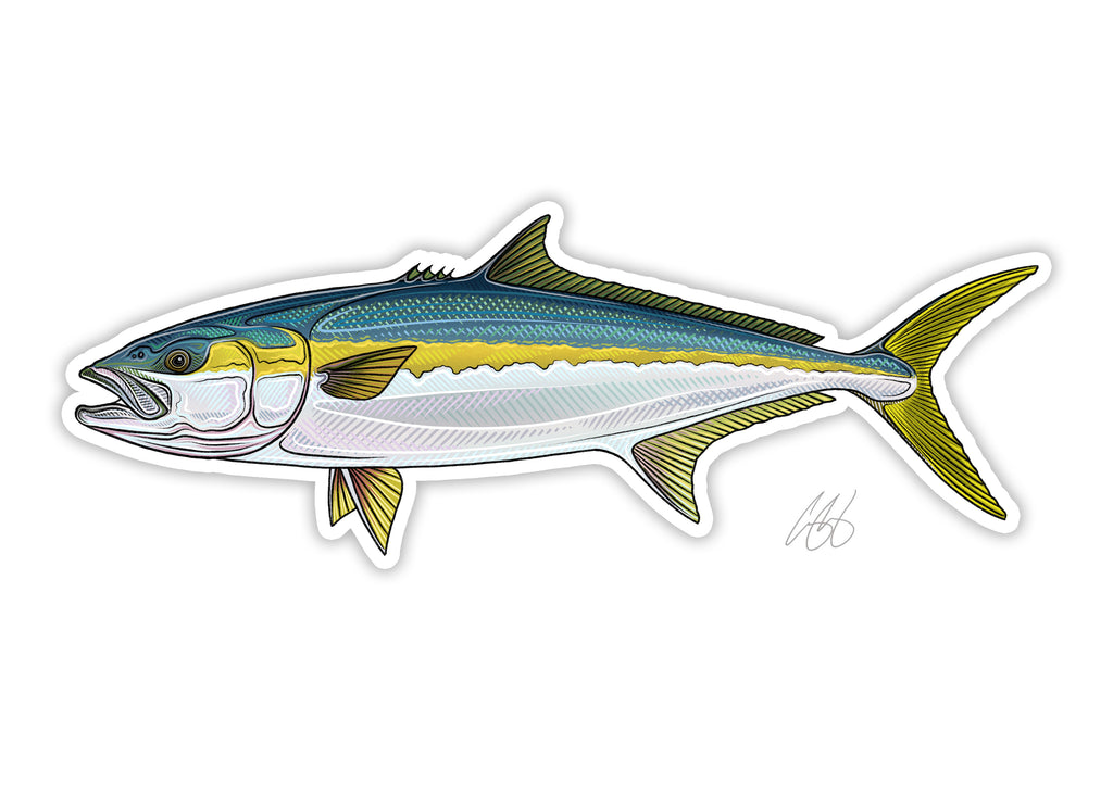 Yellowtail Decal