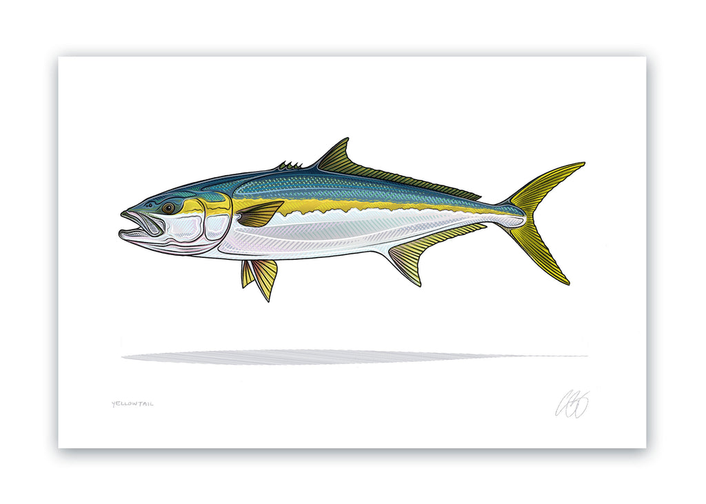 Yellowtail Print