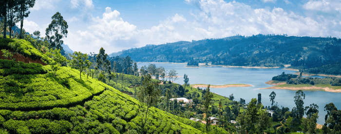 Sri Lanka, the Ultimate Tea Travel Destination