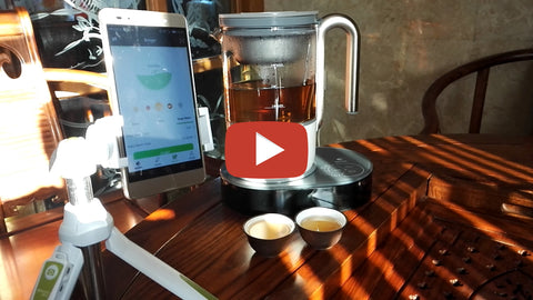 Brew Tea in a Snap with Qi Aerista