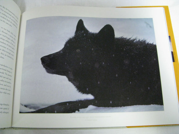 Brother Wolf A Forgotten Promise Jim Brandenburg Signed About Wolves In The Wild