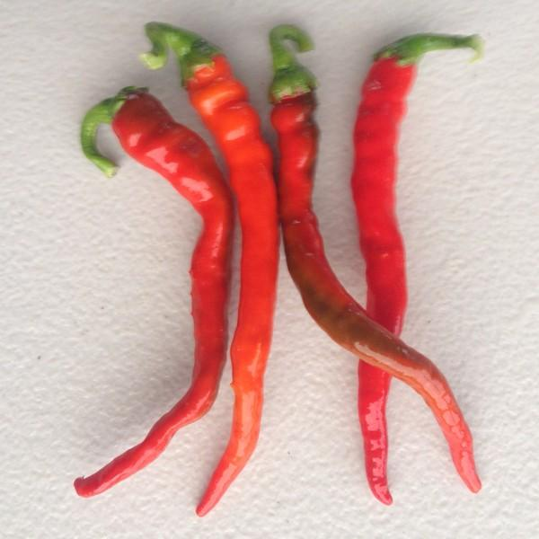 Cayenne Chilli $0.80 each - Beechworth Natural Farm