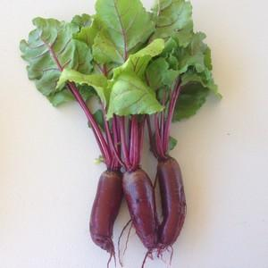 Beetroot Cylindra - Seedling - Beechworth Natural Farm