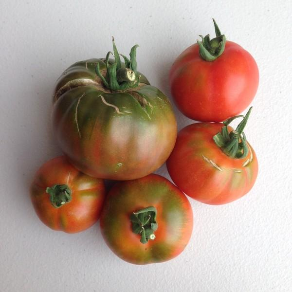 Mixed Large Tomatoes - approx 500g - Beechworth Natural Farm