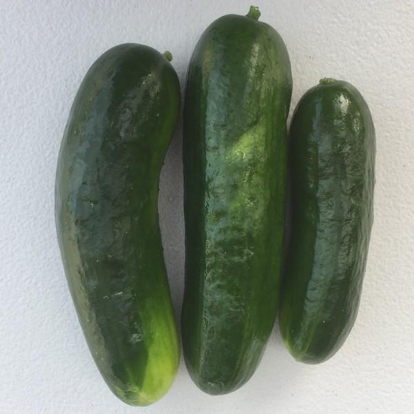 Cucumber - approx 500g - Beechworth Natural Farm