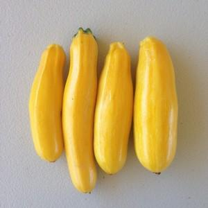 Golden Zucchini - approx 500g - Beechworth Natural Farm