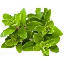 Fresh Marjoram - Beechworth Natural Farm