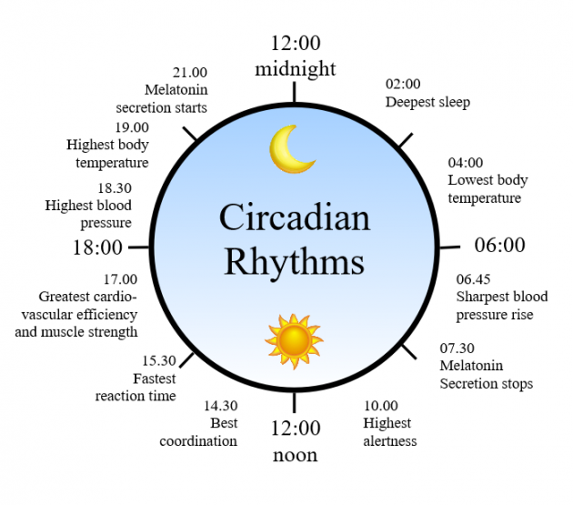 articles/circadian_rhythm.png