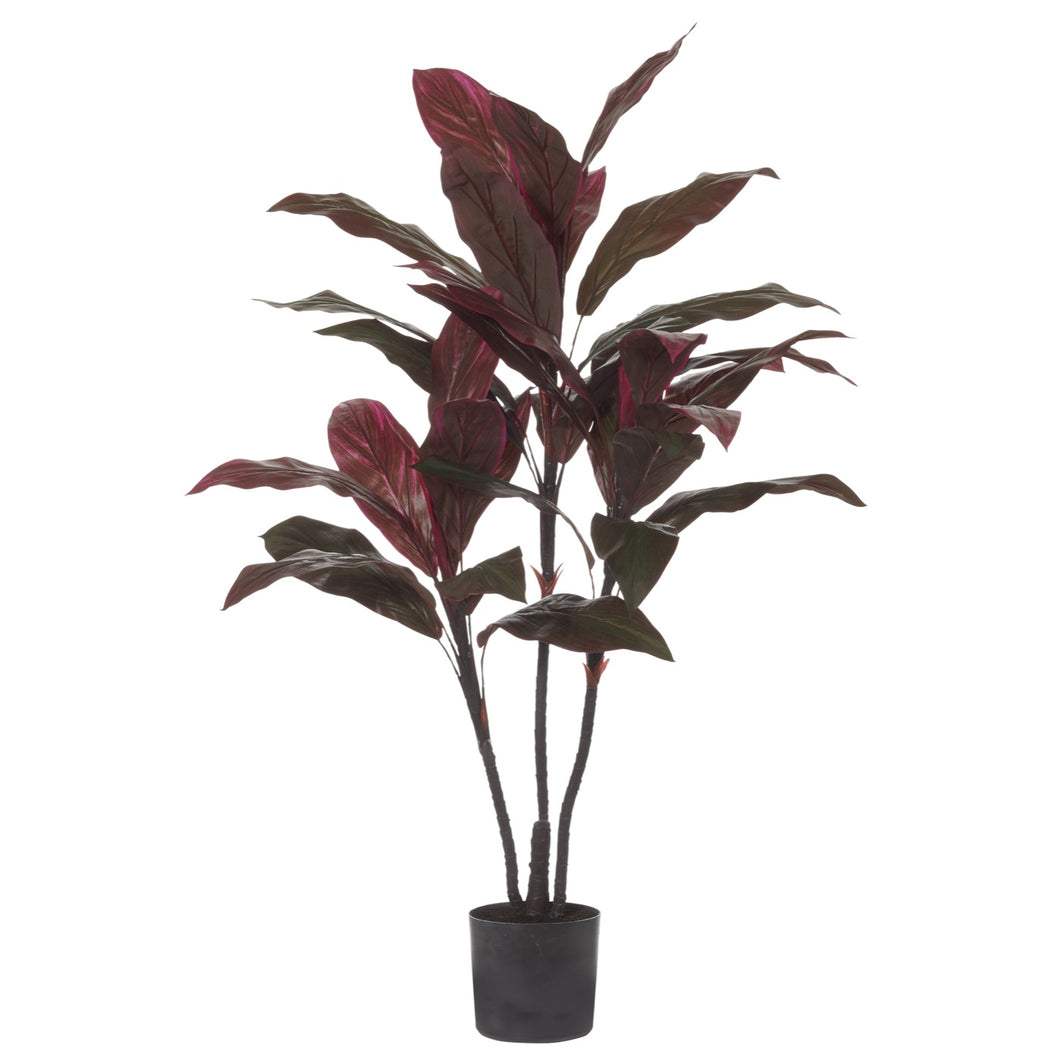 Cordyline - Red - Folke & Freya