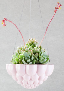 Round Jelly Planter - Pink