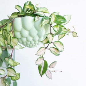Round Jelly Planter - Green