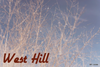 West Hill by 561 Juices