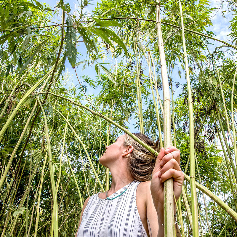 Woman in Hemp forest
