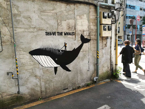 Shave the Whales Tabby Japan 2018