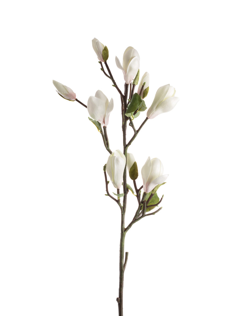 Magnolia Budded Branch