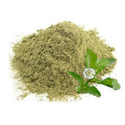Organic Eclipta Alba Powder