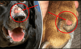 Alabama Rot UK