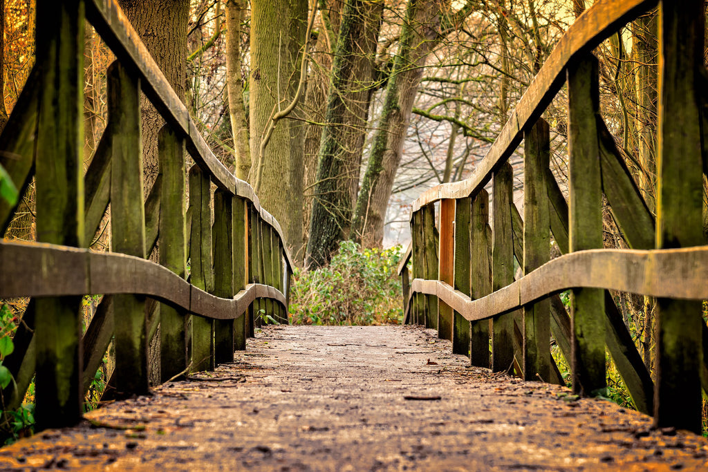 Away bridge web wood nature