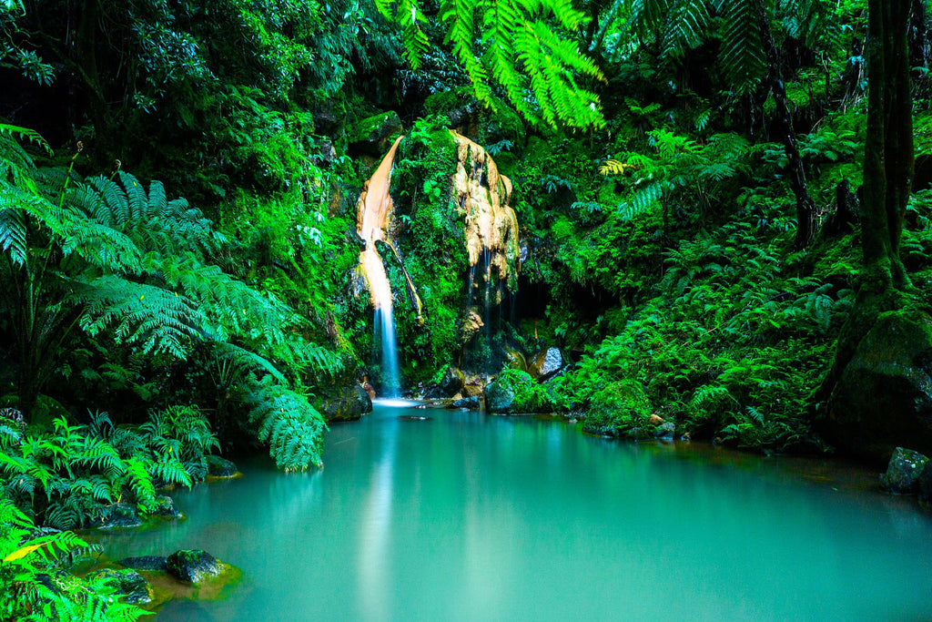 Azores waterfall oasis forest