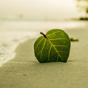 beach leaf green nature summer