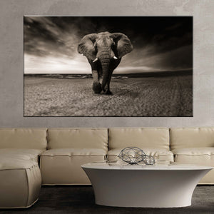 Elephant black and white animal