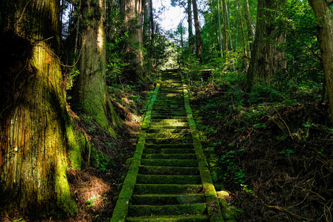 Japan aso shrine stairs moss