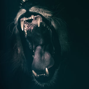 Lion teeth roar fear angry