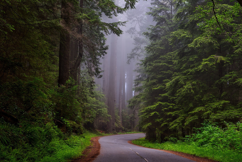 Redwood national park california hdr
