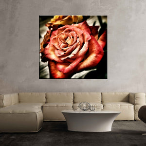 Rose flower love feelings