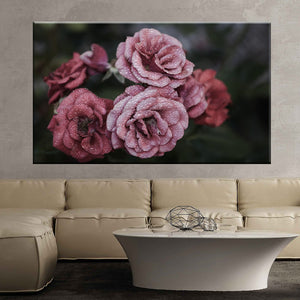 Rose flower pink floral nature