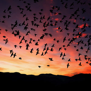 Sunset dusk silhouette sky birds