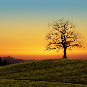 Tree sunset nature dawn landscape
