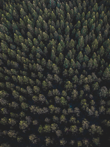 Drone Photography Australia Forest - Fine Art Prints - Aerial Photography - Interior Design Decoration
