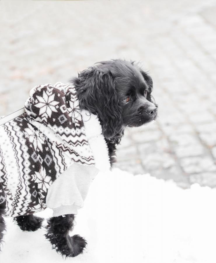 How to Tell Your Dog Needs a Jacket