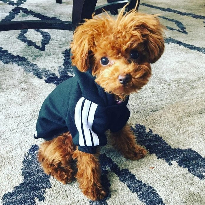 Celebrity Pooches and Their Cute Clothes