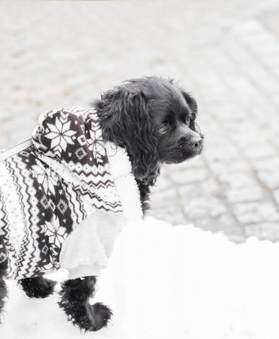 Dog-Jacket-Sweater-Clothes